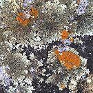Lichen patterns by jayview