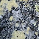patterns in the lichen by jayview