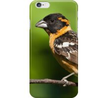 Male Black Headed Grosbeak in a Tree iPhone Case/Skin