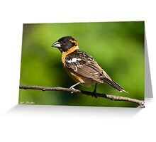 Male Black Headed Grosbeak in a Tree Greeting Card