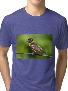Male Black Headed Grosbeak in a Tree Tri-blend T-Shirt