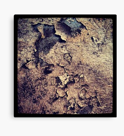 The beauty of decay Canvas Print