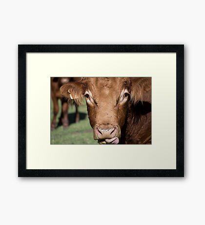 Whiskey the Bull Framed Print