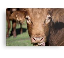 Whiskey the Bull Metal Print