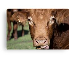 Whiskey the Bull Canvas Print