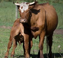 Mother and Calf by Laura Sykes