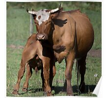 Mother and Calf Poster