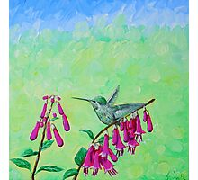 Hummingbird & Cape Fuchsia Photographic Print