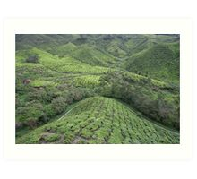 Tea Plantation Art Print