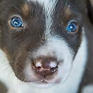 Puppy Dog Eyes by Laura Sykes