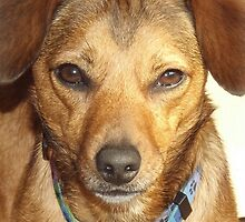 Dog Phone Case by Carmelwoolrich