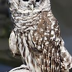 Barred Owl by Nancy Richard