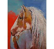 Gypsy Vanner Photographic Print