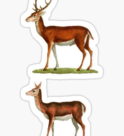 Male & Female Deer (1830) Sticker