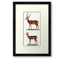 Male & Female Deer (1830) Framed Print