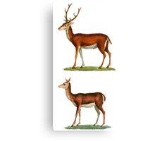 Male & Female Deer (1830) Canvas Print
