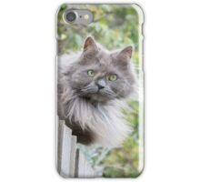 Cat sitting on fence (non-clothing products) iPhone Case/Skin