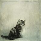 Little Kitty by Priska Wettstein