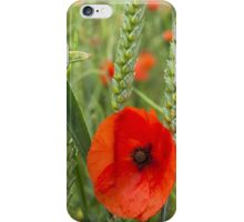Poppies in a field iPhone Case/Skin