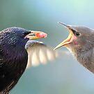 Feeding Time by Peter Barrett