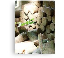 Life in the face of adversity Canvas Print