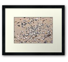 Shells and Pebbles at the Beach Framed Print