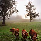 Kangaroo Valley by Edeneye