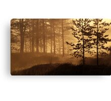 11.6.2016: Pine Trees in Morning Mist Canvas Print