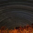 Moremi NP with MilkyWay by Withns