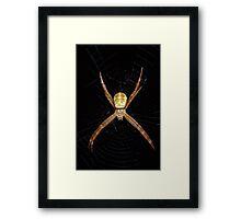 Mystery spider Framed Print