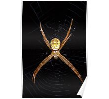 Mystery spider Poster