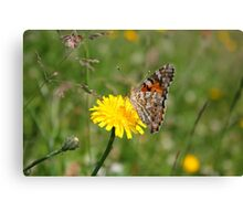 Painted Lady on dandelion Canvas Print