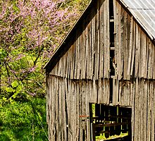 Springtime In Kentucky by mcstory