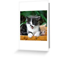 Mouse... Greeting Card