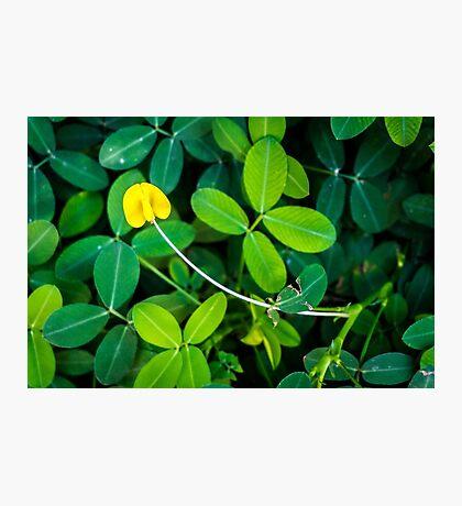 One Flower among Foliage Photographic Print