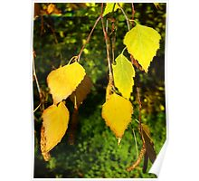 Golden Leaves Poster