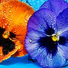 Two Pansies Floating in a Pool by Tori Snow