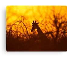 Golden silhouette giraffe Canvas Print