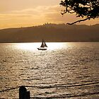 Yacht returning at sunset. by brians101