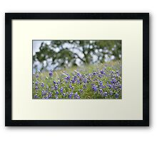 Lupin Meadow Framed Print
