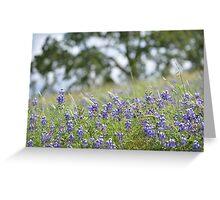 Lupin Meadow Greeting Card