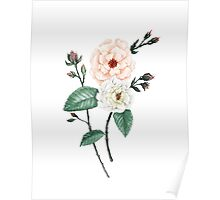 Rose I, Peach Cream on White Poster