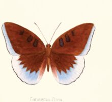 Aid to the identification of insects Charles Owen Waterhouse 1890 V1 V2 021 Tanaecia Flora Penang Sticker
