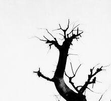 Natural art by teina-tokyo