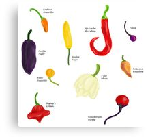 Chilies Galore! Canvas Print