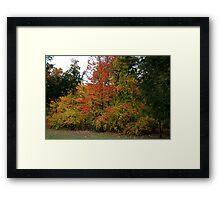 A Gentle Wind in Wildwood Framed Print