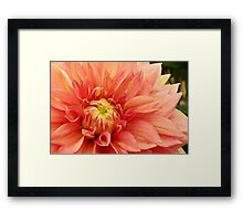 WATERCOLOR DAHLIA Framed Print
