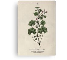 Wayside and woodland blossoms a pocket guide to British wild flowers for the country rambler  by Edward Step 1895 034 Round Leaved Crane's Bill Canvas Print