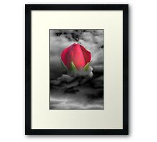 Beauty Reborn Framed Print