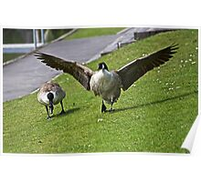 Funny Geese Poster